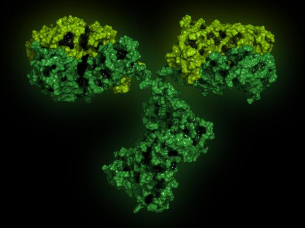 Mouse Anti Crimean-Congo Hemorrhagic Fever Virus Gn Antibody (JE12)