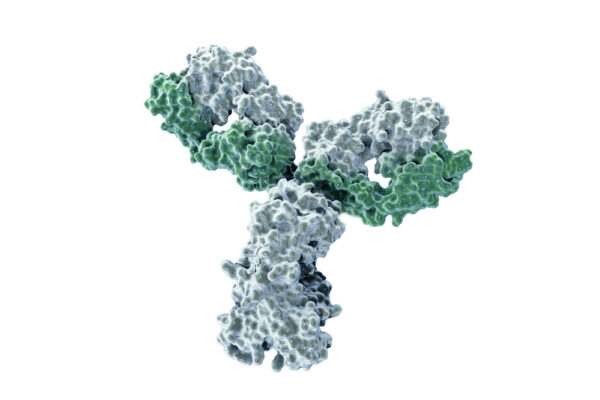 Human IgM Anti-Flavivirus Envelope Protein Antibody (4G2)