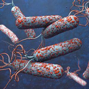 Clostridium difficile ribotype 78