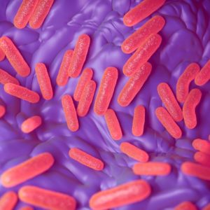 Red-bordetella-bacteria