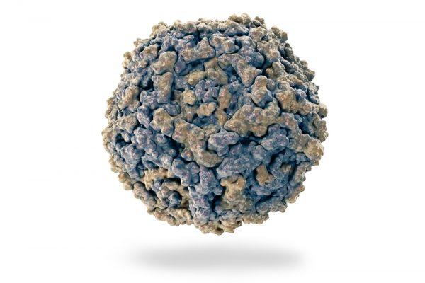 Beige-parvovirus-particle
