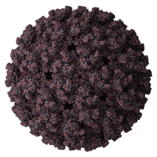 Atomic-model-of-mayaro-virus