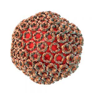 Rift valley fever capsid on white background