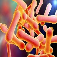 Mouse anti Diphtheria Toxin antibody (7801)