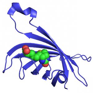 Streptavidin-FITC Conjugate