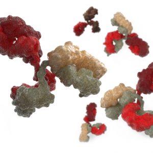 Antibodies on white background