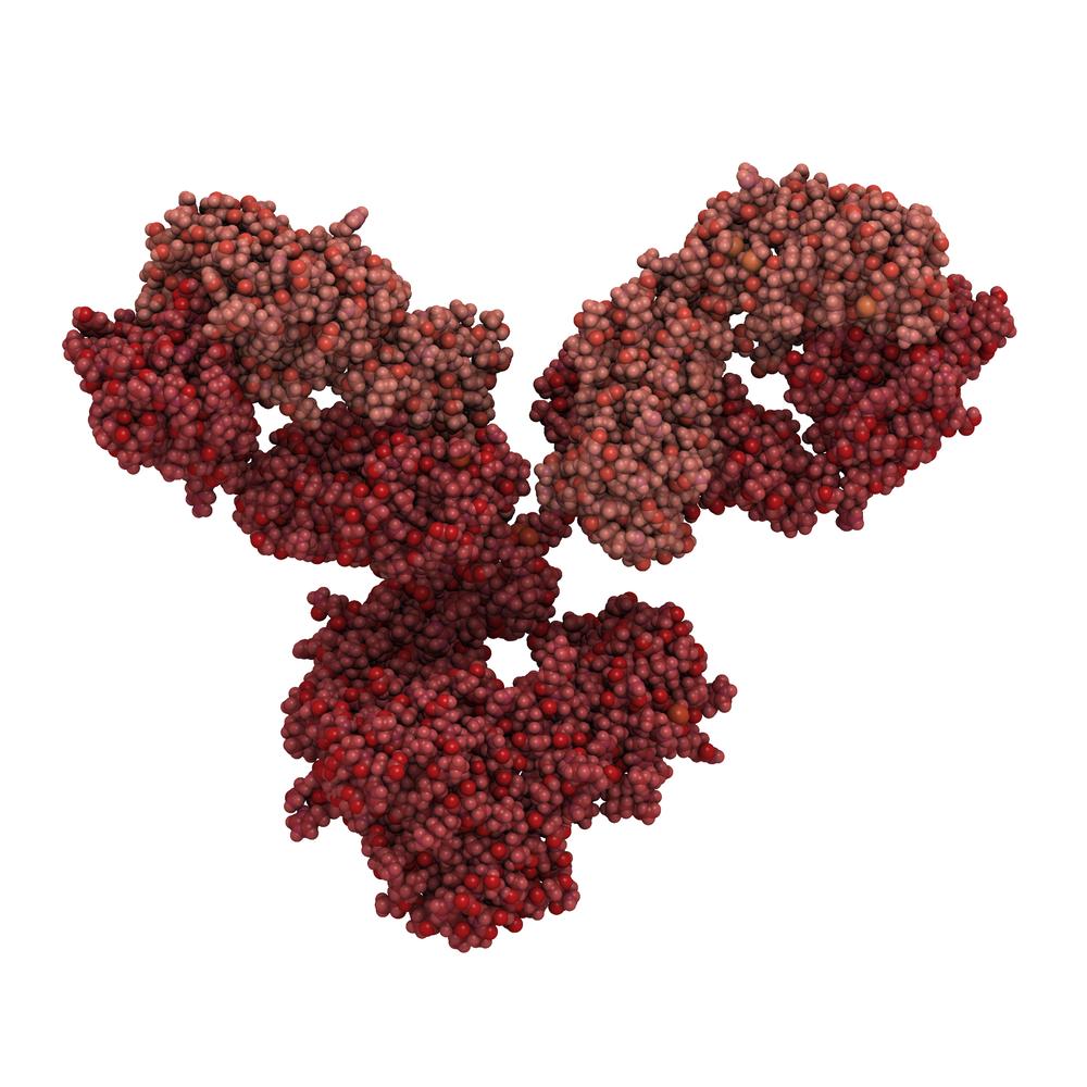 Antibody On A White Background Stock Vector: West Nile Virus NS1 Antibody (ID12)