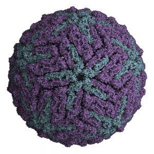 Flavivirus capsid