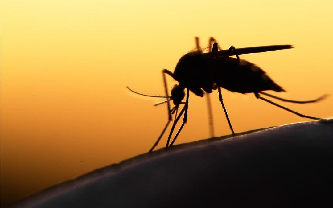 Challenges to Effective Yellow Fever Diagnostics
