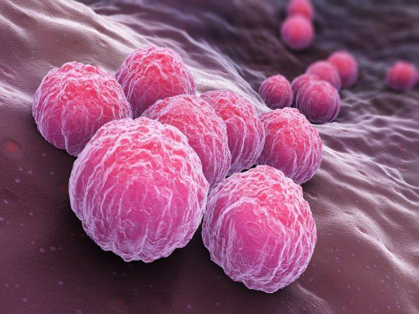 Chlamydia trachomatis MOMP antibody Chlamydia LPS antibody Chlamydia LPS antibody Chlamydia LPS antibody