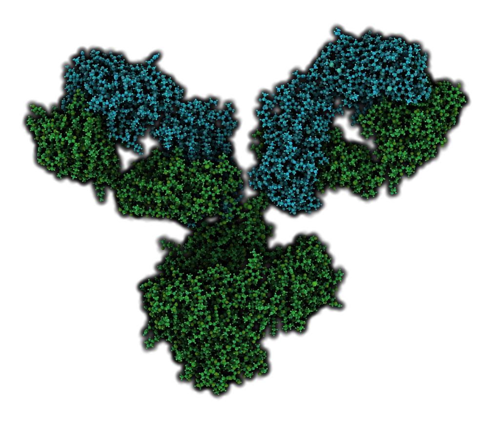 Antibody On A White Background Stock Vector: Dengue Virus NS1 Antibody (serotype 3)