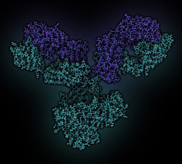 Green and purple antibody on black background