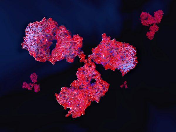 Mouse Anti-Influenza B Antibody (YB91)
