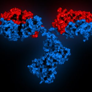 Red and blue antibody on black background