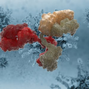 Red and yellow antibody on blue background