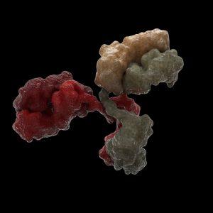 Mouse Anti-Japanese Encephalitis Virus NS1 Antibody (DE7)