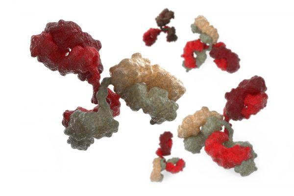 Mouse Anti-Japanese Encephalitis Virus NS1 Antibody (CA5)