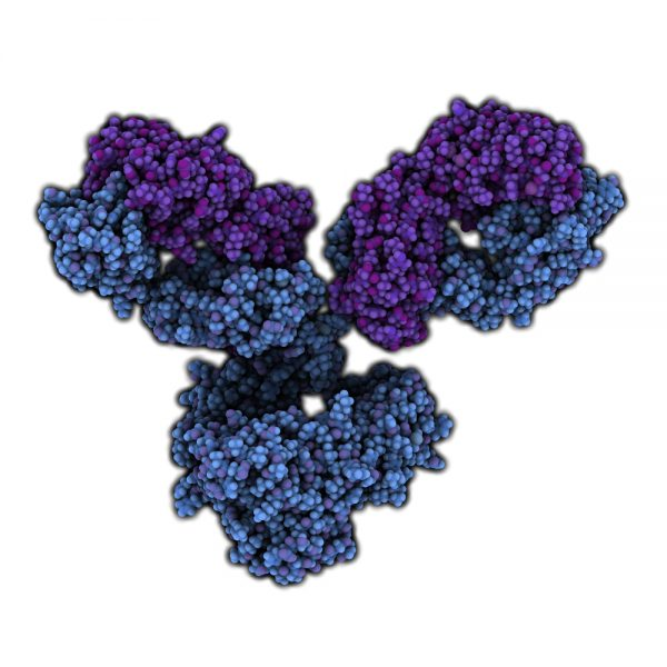 Blue and purple antibody on white background