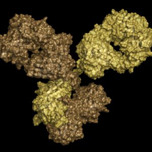 Yellow and brown antibody on black background
