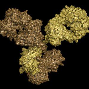 Yellow antibody on black background