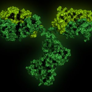 Green and yellow antibody on black background