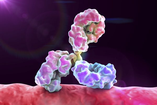 Pink and purple antibody on cell surface