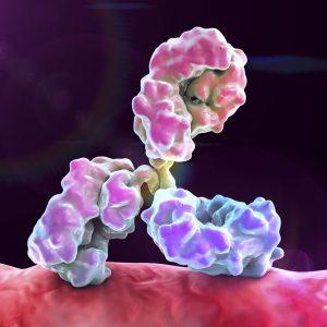 Human IgG1 Anti Dengue Virus NS1 Serotype 1 Antibody (OB4)
