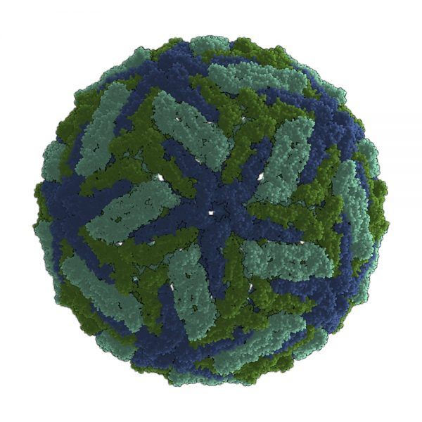 Green and blue zika virus capsid