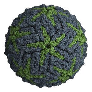 Blue-and-green-flavivirus-capsid