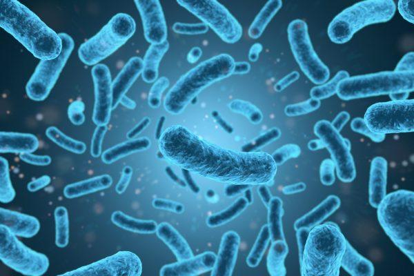 Listeria monocytogenes antibody Listeria monocytogenes antibody