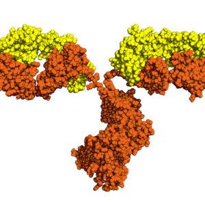 Anti Plasmodium vivax MSP1 (PVM-1) Mouse anti Enterovirus 70