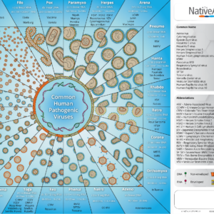 Preview-of-common-human-pathogenic-viruses-poster