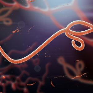 Ebola Virus Nucleoprotein Sudan