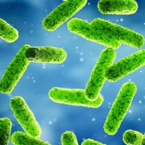 LegioTag Legionella Pneumophila Specific Label