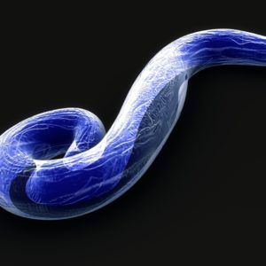 Plasmodium falciparum LDH Protein