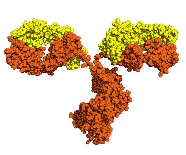 Anti SARS-CoV Membrane Antibody