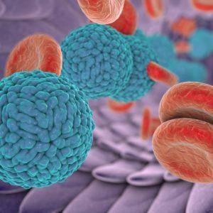 Dengue Virus Pre-Membrane