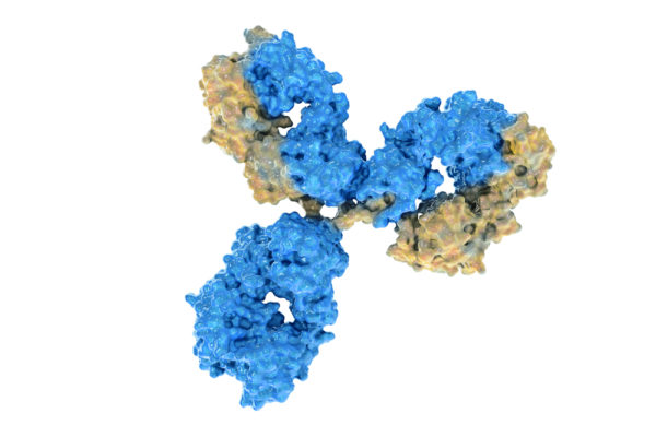 Dengue virus pan-serotype NS1