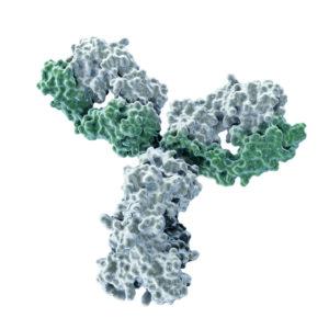 Hepatitis B core antibody