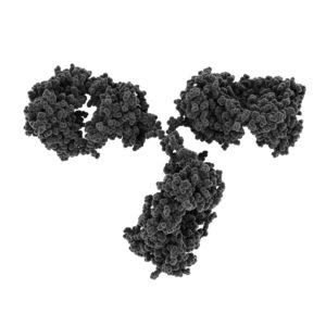 Dark grey antibody on white background