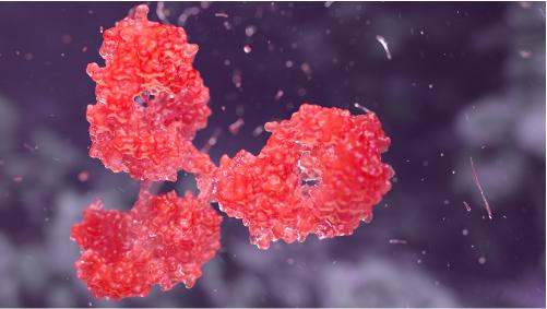 Red-antibody-on-purple-background Plasmodium falciparum HRP-2 antibody