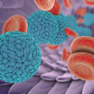 Dengue virus serotype 1 Dengue virus serotype 1