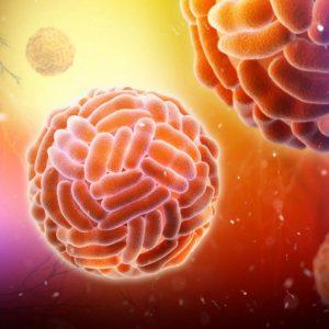 Lassa fever virus GP2 Saint Louis Encephalitis virus