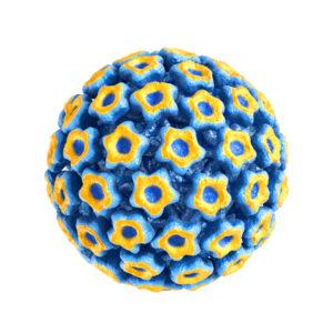 Feline Panleukopenia Virus Antigen