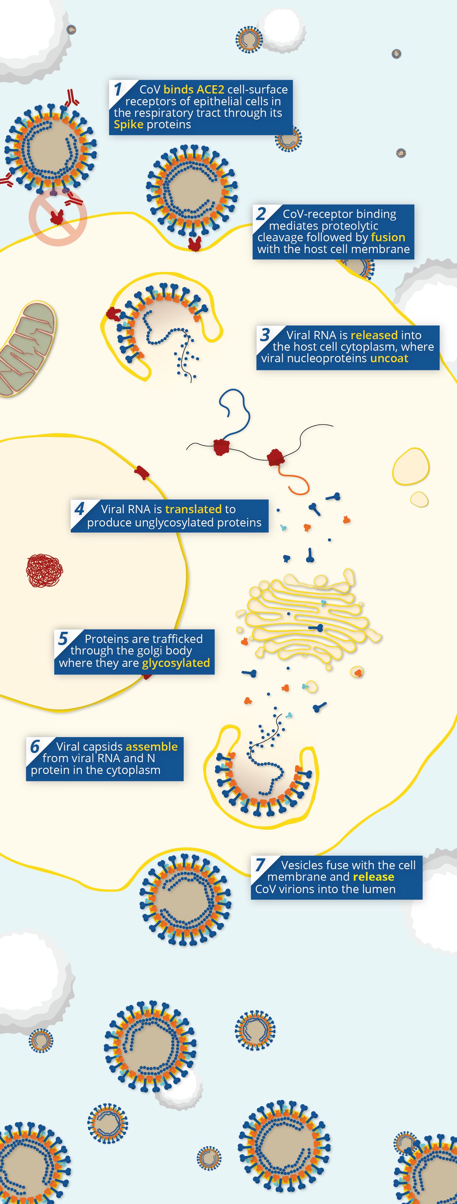 antigén giardia synévo pret helmint fertőzés terhes